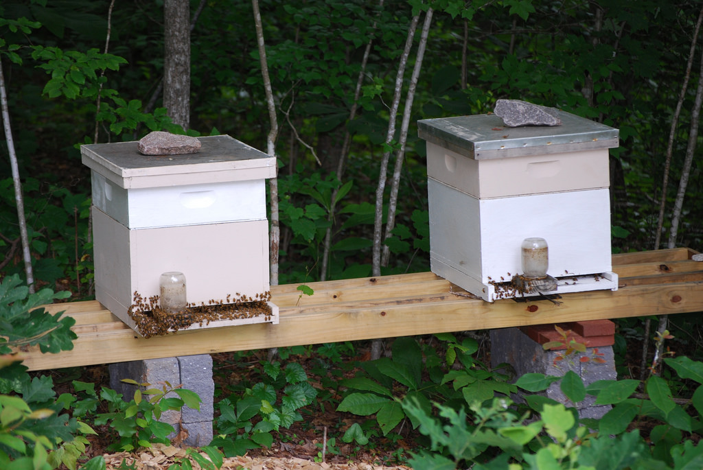 bee hive forest_large.jpg