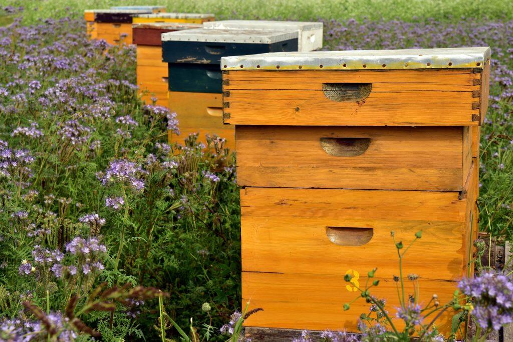 Bienenstock.jpg