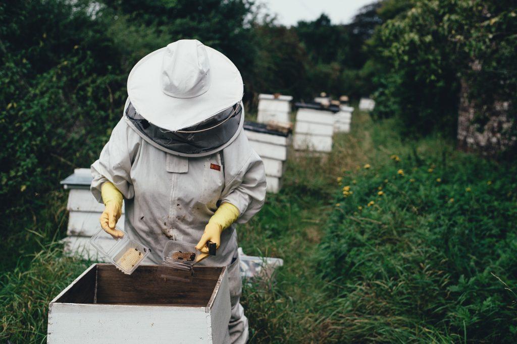 Bienenstock_Imker.jpg