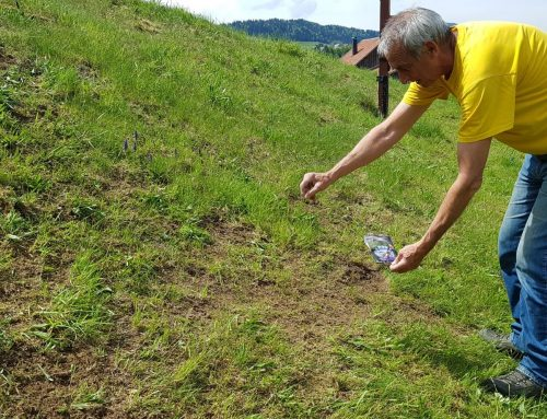 Paradisi per gli impollinatori nel parco naturale Nagelfluhkette