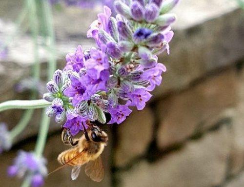 Capizzone e la casa delle api. Impariamo a vedere le api con occhi diversi.